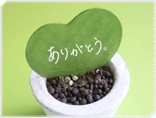 【厳選】敬老の日は花のプレゼント!定番の種類やおすすめ花言葉