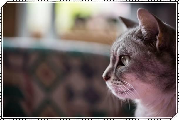 【夢占い】猫にひっかかれるのは裏切られる暗示!対人関係に注意するべき